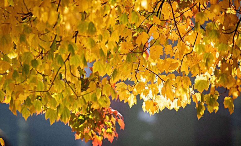 Herbst: Sicher durch die dunkle Jahreszeit
