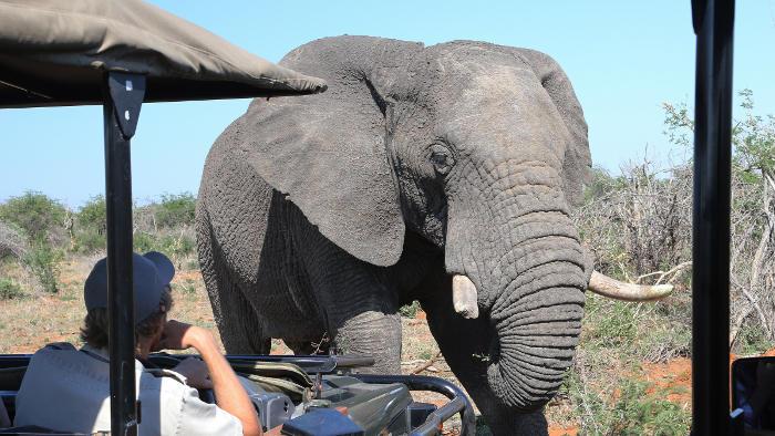 Elefant auf der Amarok Adventure 2015